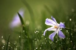 I gräsmattan torsdag morgon