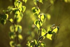 En vänlig grönska