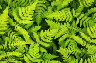 Grönt skönt