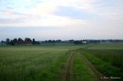 Vägen hem