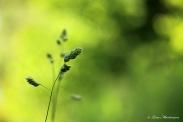 Det gröna