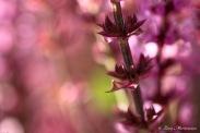 Det rosa