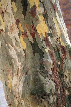 Kamoflagebark