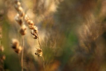 Visset i grusgropen