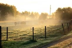 I morgonsolen