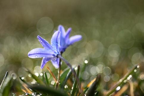 Vårstjärna med bling!