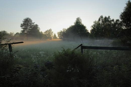 Intåg i sommarhagen ( fotat i Stenunga)