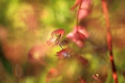 Små blad