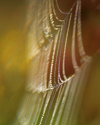 Pärlorna