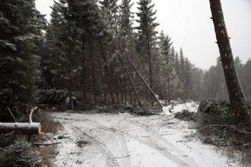 Fallen skog