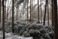 Tre stadier: Stående, halvt nere och liggande träd