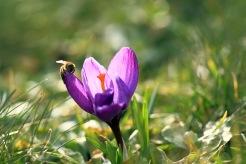 Mums med pollen!