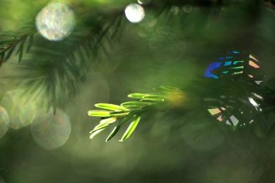 Kvarglömt julgranspynt?