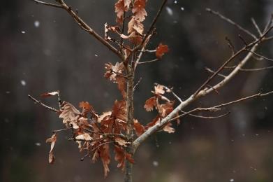 Snöar småspik