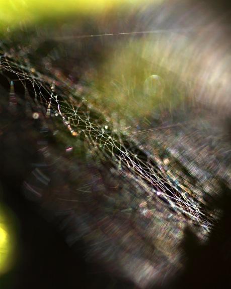 Norrsken i spindelvärlden
