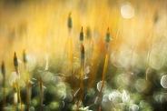 Daggvåta sporer