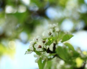 Små blommor