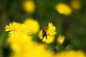 Pollensamlare