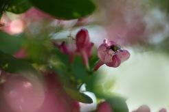 Flugan och blomman