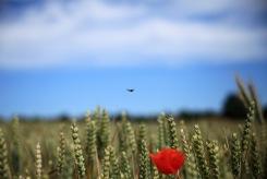 På väg mot landning i vallmon