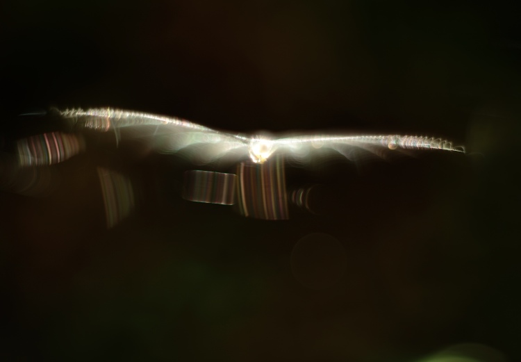 Ett flygande väsen?