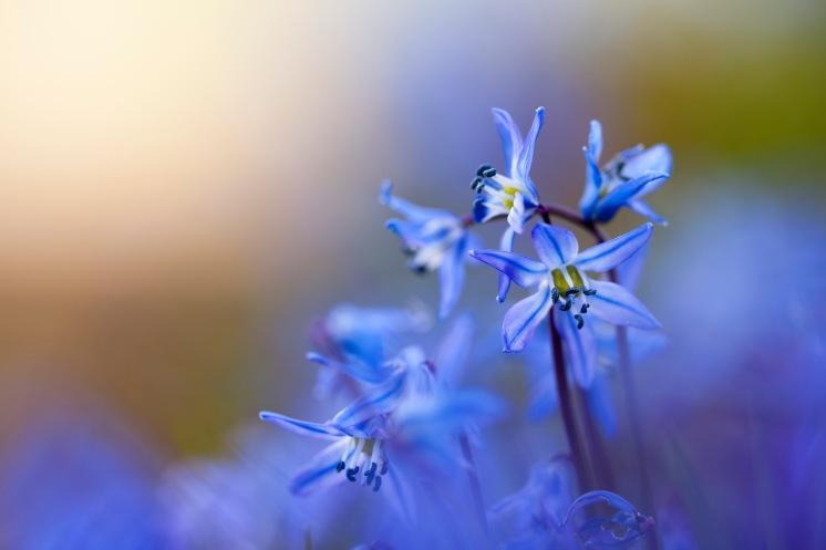 Blommar för fullt