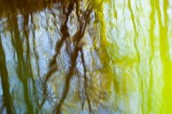 Vattenträd