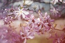 Magnolia redigerad i Color efex